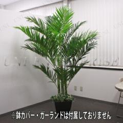 【送料無料】人工観葉植物 光触媒 アレカヤシ 210cm インテリア・生活雑貨 大きい ヤシの木 椰子 フェイクグリーン インテ