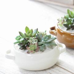 『多肉植物寄せ植え Assiette アシェット』【観葉植物 ミニ 多肉植物 寄せ植え ギフト】【送料無料】
