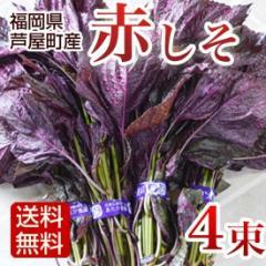 赤しそ 1kg 4束 枝付き 梅干し用しそジュース用 福岡県芦屋