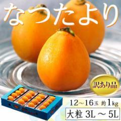 びわ 枇杷 長崎県産 なつたより 訳あり品 大粒3〜5L 12〜16玉 約1kg 送料無料 ※冷蔵