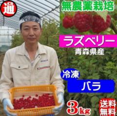 ラズベリー 冷凍 バラ 送料無料 1kg×3パック 無農薬栽培 無添加・無着色 国産 木苺 キイチゴ