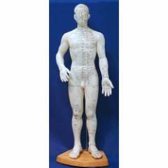 鍼灸 針灸 按摩 人体ツボ 模型 男性 大