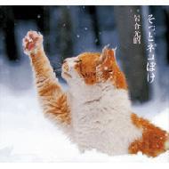 【単行本】 岩合光昭 / そっとネコぼけ 送料無料