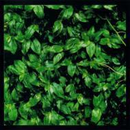 【Hi Quality CD】 エレファントカシマシ(エレカシ) / ココロに花を 送料無料
