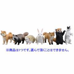 タカラトミー 【1パック】アニアくじ(2) どうぶつのこどもコレクション 【返品種別B】