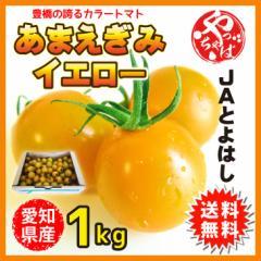 豊橋自慢のカラーミニトマト あまえぎみイエロー 愛知県産 JAとよはし 1kg ミニトマト 送料無料