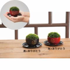 ミニ盆栽 苔 花 苔玉