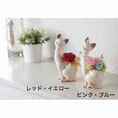 花 ローズキャット(プリザーブドフラワー)