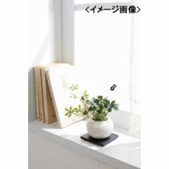 ギフト 観葉植物シュガーバイン(造花)インテリア 置物/4545