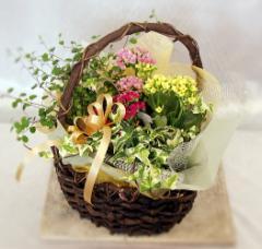 寄せカゴ 旬の花々【フラワーギフト】