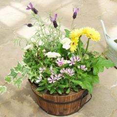 寄せ植え*季節のおまかせ<Mサイズ>*メッセージ可 【鉢植え ギフト 誕生日プレゼント 女性 母 祖母 新築祝い 花】