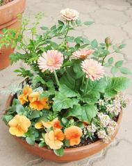 寄せ植え*季節のおまかせ<Sサイズ>*メッセージ可 誕生日プレゼント 女性 母 祖母 プレゼント お祝い 鉢植え ギフト 新築祝い 花