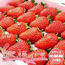 【送料無料】紅ほっぺいちご(約700g/化粧箱)ほっぺが落ちるほど美味しいイチゴ♪化粧箱(24粒前後)苺