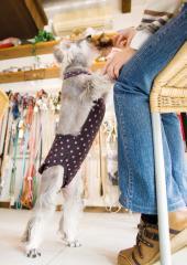 【きゃんナナ】星柄マナースーツ 3Sサイズ 超小型犬 ベビー 子犬用 マナーパンツ