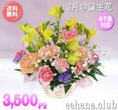 3月誕生花★カラフルアレンジ3,500円【送料無料】ネット特価!