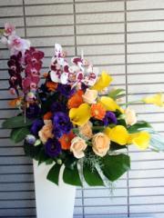【送料無料】お花お任せ!お祝い花アレンジメント/プレゼント/ギフト