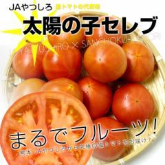【送料無料】JAやつしろ 太陽の子セレブ 約1キロ MからSサイズ(11から16玉) とまと トマト