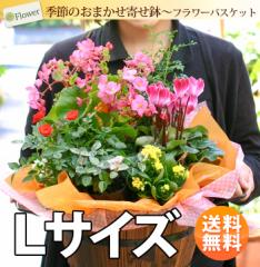季節のおまかせ花鉢とグリーンの寄せ入れ<Lサイズ> 【誕生日 プレゼント 祖母 母 女性 お祝い 花 贈り物】