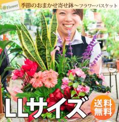 季節のおまかせ花鉢とグリーンの寄せ入れ<LLサイズ>