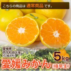 【3営業日以内に出荷】ミヤモトオレンジガーデンのみかん 愛媛みかん(極早生) 秀品 5kg  送料無料