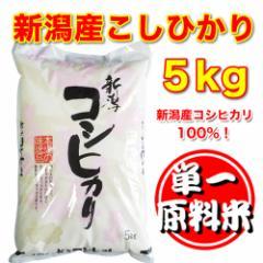 新潟県産こしひかり 100% 白米 5kg [新潟産,米,コ...
