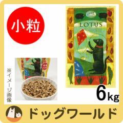 ロータス アダルト ドッグ ラムレシピ 小粒 6kg ★ポイント10%還元★