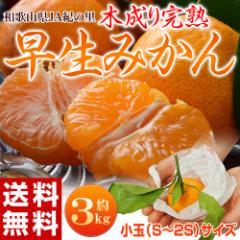 みかん 和歌山県紀の里産 完熟「袋掛けみかん」 小玉s〜2s 約3kg ※常温・送料無料 ☆