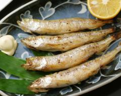◆新生活◆北海道日高産 生干し 本ししゃも オス・メス20尾/魚/食品/送料無料(father-sisyamo)