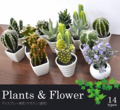 植物&フラワーディスプレー■ショップやお部屋のインテリアに!お花・サボテンディスプレー(造花)【丸鉢・四角鉢】