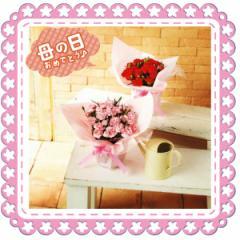 カーネーション鉢植え/鉢植え/母の日/赤/ピンク/プレゼント/カーネーション/送料無料