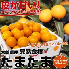 送料無料 宮崎県から産地直送 JA宮崎中央 たまたま 2Lサイズ 1キロ(約40粒)きんかん 金柑
