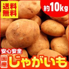 【送料無料】生活応援!国産 じゃがいも 約10kg【ジャガイモ】 (gn)