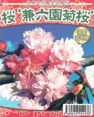 【桜苗木】 兼六園(けんろくえん)菊桜 13.5cm深ポット苗 【出荷時期:2月中旬〜】