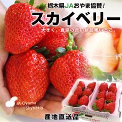 送料無料 栃木県より産地直送 JAおやま スカイベリー 約600g (300g(6から12粒)×2P)