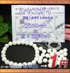 1000円以上で送料無料 月替わり1円●シャコガイ...
