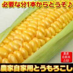 とうもろこし 農家自家用 ゴールドラッシュ 1本 クール便 国産 野菜(gc)