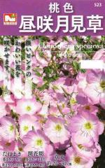桃色昼咲月見草 【郵送対応】