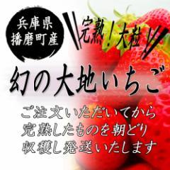 【季節限定】幻の大地いちご【送料無料】