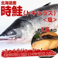 【送料無料】【絶品の味わい!トキシラズ緊急入荷】北海道産時鮭 約1.5キロ!(塩)