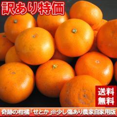送料無料 訳あり 奇跡の柑橘!農家自家用せとか約2.5kg みかん ミカン 柑橘(gn)