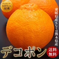 熊本県産(もしくは愛媛県産) デコポン 2.5kg 送料無料 フルーツ 柑橘