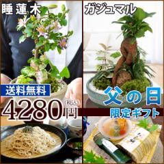 【父の日ギフト 送料無料】選べる創作盆栽『睡蓮木』か『ガジュマル』と老舗『橋本のお蕎麦』か『阿波の涼菓』のひんやりスイーツセット