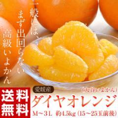 《送料無料》愛媛産 ダイヤオレンジ(大谷いよか...