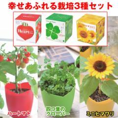 幸せあふれる栽培3種セット(四つ葉のクローバー,室内用ミニひまわり,ハート型ミニトマト,ギフト,ハートポット)