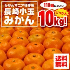 送料無料 みかん 長崎こだまみかん ホープ  約10kg 蜜柑(gn)