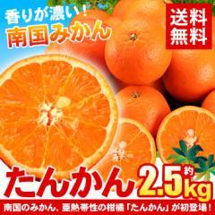 送料無料 鹿児島県産 たんかん約2.5kg  みかん オレンジ ポンカン 柑橘(gn)