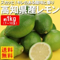送料無料 レモン 高知県産レモン 1kg 檸檬(gn)
