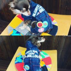 犬 犬服 ロンパース ネイビー XSサイズ かっこいい オーバーオール ダメージ加工デニム オシャレ つなぎ 仔犬