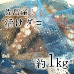 活けタコ 佐島産 ブランドダコ 1kg 生タコ 神奈川県名産 佐島 地ダコ【佐島タコ1K】