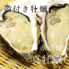 殻付き牡蠣 生食用カキ | 三陸産 | 大サイズ 12個 築地直送 かき【赤崎牡蠣30x12個】